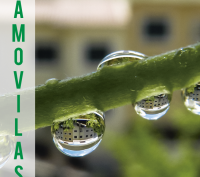 AMOVILAS_Out_2014_web-1