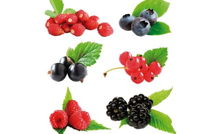 berries-favorecem-a-boa-forma